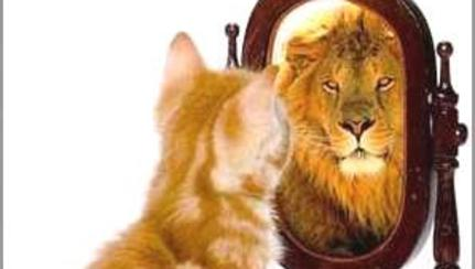 cat looking in a mirror